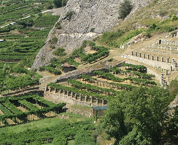 Aosta Valley Prie Blanc vines